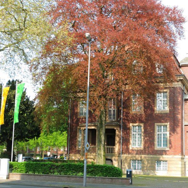 Museum für Lackkunst