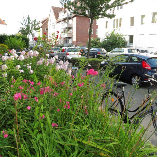Blumen im Südviertel in Münster
